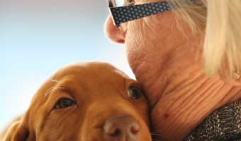 The wonderfulness of what a dog can do for anyone with MCI