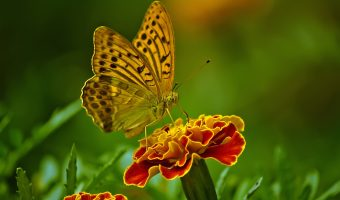 A broken butterfly, a wise child and a lesson in living with MCI